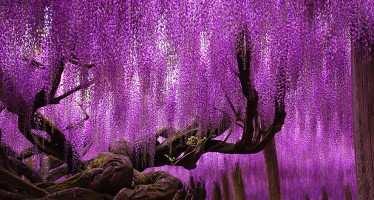 ბუნება მბრძანებელია — მსოფლიოს უცნაური ხეები