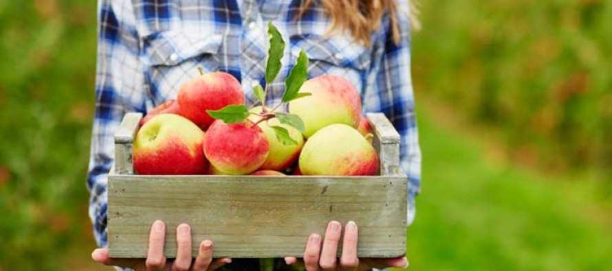 საკვები, რომლებიც ჰორმონულ ბალანსს უწყობენ ხელს