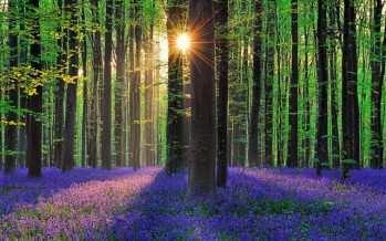 «ჰელერბო»-ზღაპრული ტყე