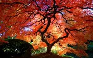 most-beautiful-trees-in-the-world-1