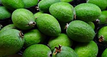 ფეიხოა- მრავალ დაავადებასთან მებრძოლი, ვიტამინებით სავსე ხილი