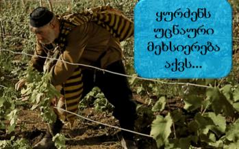 ღვინის საიდუმლო და ყურძნის უცნაური მეხსიერება
