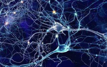 სარკისებრი ნეირონები