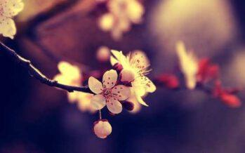 """""""ყოველდღე ხმამაღლა უმტკიცეთ საკუთარ თავს ის, რაც თქვენს ცხოვრებაში გინდათ მოხდეს და ეს მოხდება"""""""