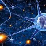 აღმოჩენა ნეირომეცნიერებაში — მადლიერება პირდაპირკავშირშია ბედნიერებასთან