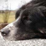 ძაღლის მოტანილი წერილი